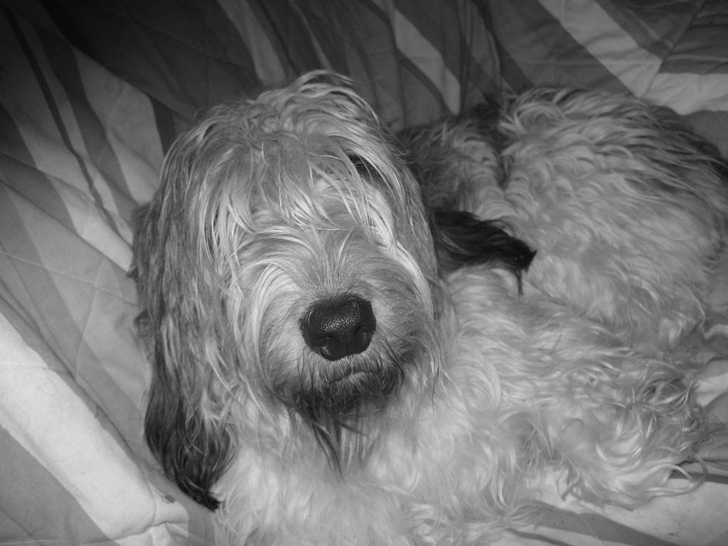 daisey-dog
