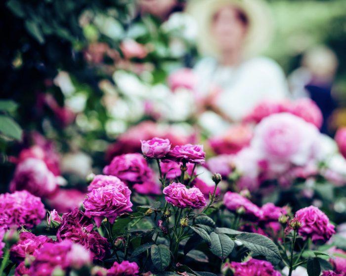 Cornwall Flower Show